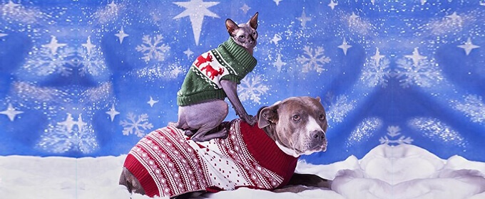 perro y gato con ropa de navidad